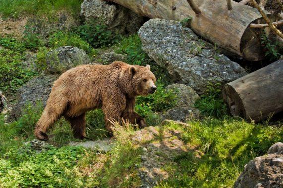 Zoos & Wildparks - Ausflugsziel im Salzburger Land